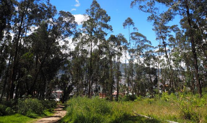 5 Minuten hinter unserem Haus ist das Tor zum Parque Metropolitano