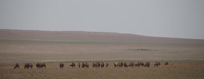 Wüstenlandschaft mit Kamelen