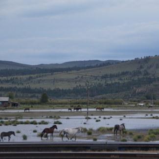 Pferde im russischen Grenzort Nauschki