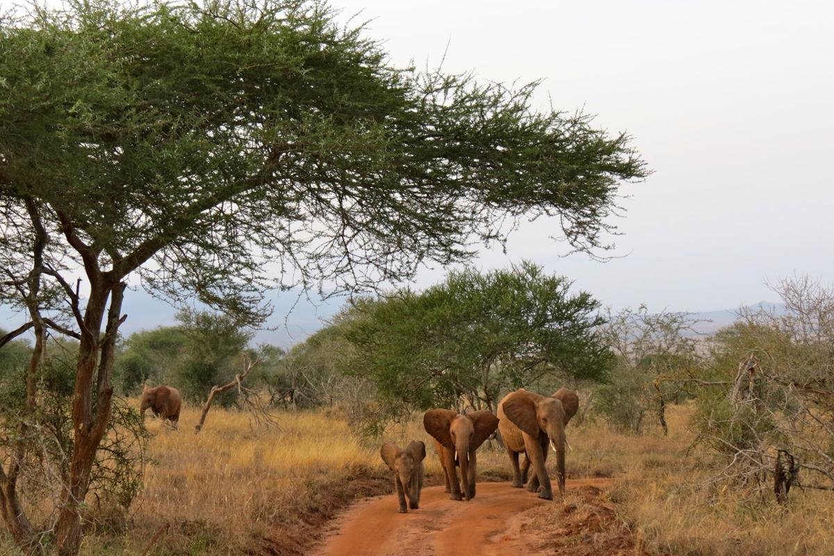 Weltblick_Afrika_Naturvielfalt