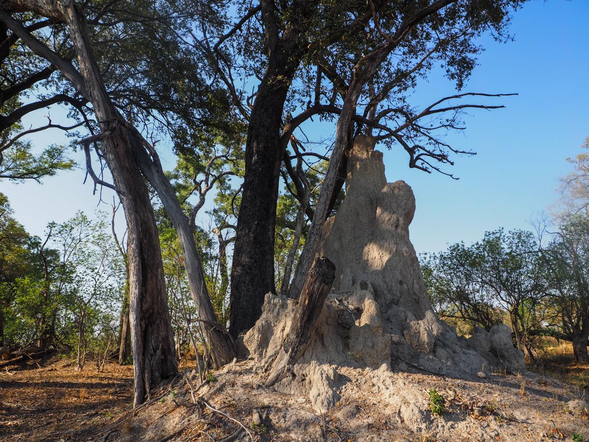 Einer der zig Termitenhügeln
