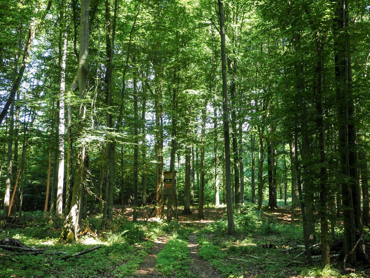 Grumsiner Wald, Uckermark