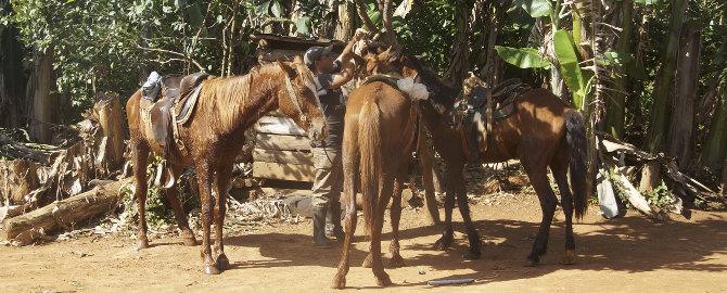 Pferde in Vinales